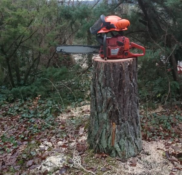 foto boomstronk met zaag en helm