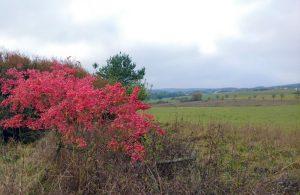 herfstkleuren3-oct-2016