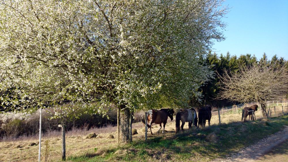 Lente in de Eifel
