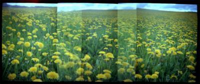veld met bloemen, lomophoto